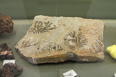 Dendritic mineral crystals are often mistaken for fossils due to their branching or tree-like growth pattern. Dendrites form when manganese or iron-rich water flows along bedding planes allowing minerals to precipitate in the distinctive branching pattern. Zde, via Wikimedia Commons
