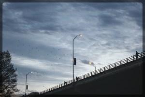 Bat Watching and Sunset Tour, Austin, Texas