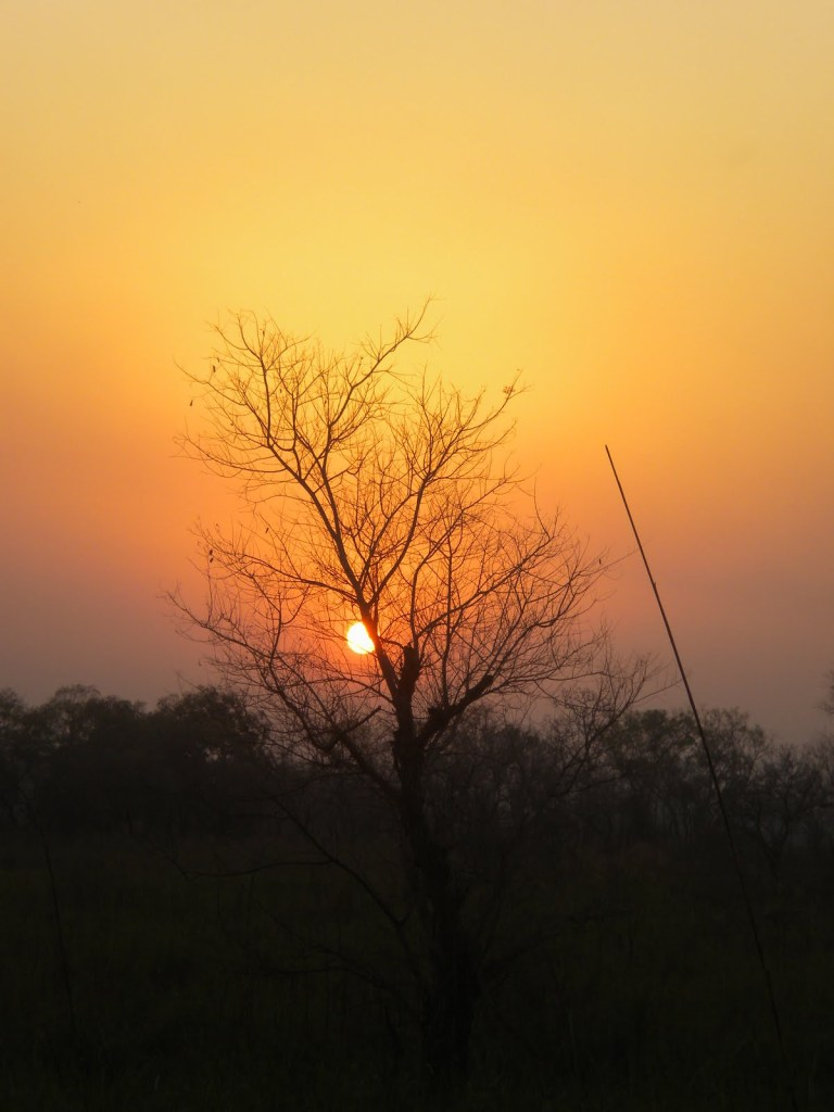 Dudhwa National Park, U.P., India, 2008