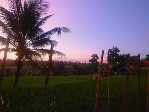 Sok Wayah, Ubud, Bali, Indonesia, 2018