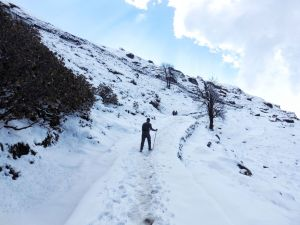 Hiking to Tunganath temple in Chopta, Uttrakhand