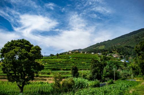 Vattavada village farmlands