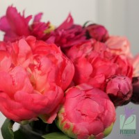 Flower of the Month - Peony