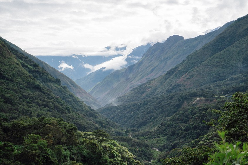 Sacred Valley Jungle