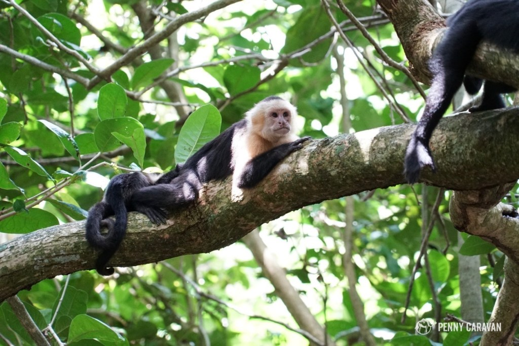 Hanging out with monkeys at Manuel Antonio National Park