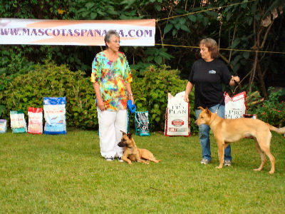 We had a dog show in Boquete, where my sweet little girl dog Zap made her debut