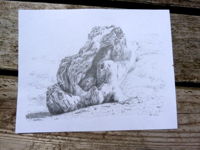 Driftwood sketch