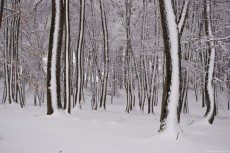 snow-stripes-230x153