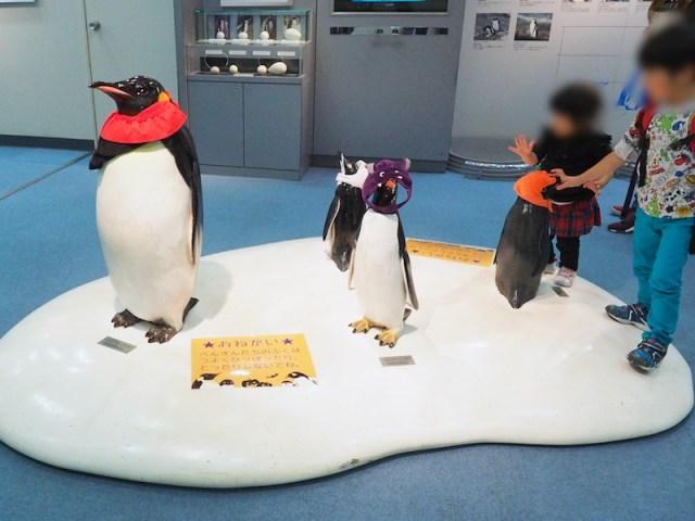 Nagoya Aquarium Halloween