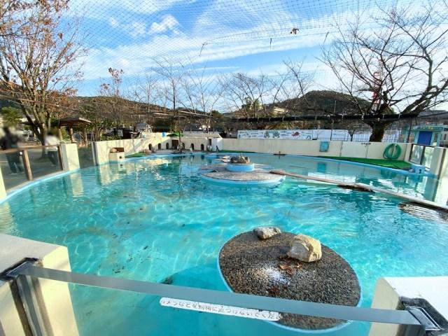 京都市動物園 ペンギン