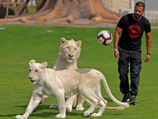 Photos: A look inside the Al Buqaish Private Zoo in Sharjah