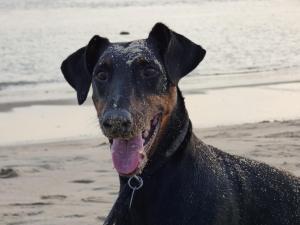 dog friendly beaches in Pensacola