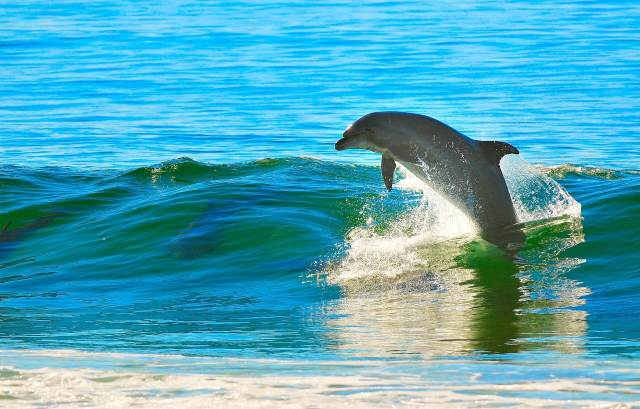 Pensacola Beach Dolphin Excursions