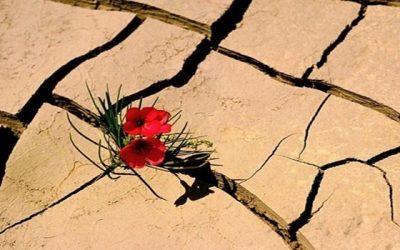 Dicas para você superar as adversidades que tem na vida
