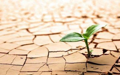 Aprendendo a crescer com as adversidades