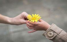 Ser gentil é ser nobre