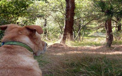 Alerta para quem tem cães cuidado com a Lagarta do pinheiro