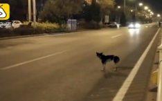 Cão está esperando há 2 meses por dona em estrada onde ela faleceu