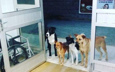 Cães esperam na porta de hospital por morador de rua