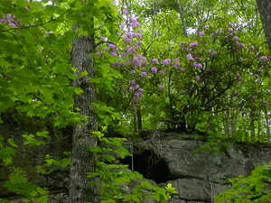 Cave_mt_laurel_cumberland_trail