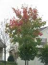Fall_tree_3