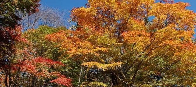 只今カレンズの周りは紅葉真っ盛り&落ち葉のジュータンを踏みしめて