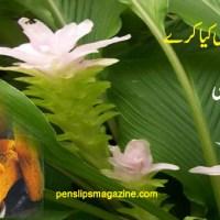 ہلدی بے چاری کیا کرے ۔۔۔۔ سبین علی
