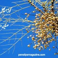 کوڑا پھل ۔۔۔ صفیہ حیات