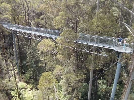 A path through the canopy