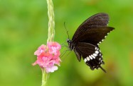 flowers-bokehlicious-beautiful-butterfly-splendor-nature-flower-hd-desktop