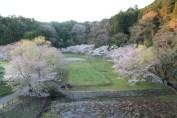 上総亀山 cherry blossoms 2