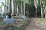 Graveyard in the middle a small bamboo grove.
