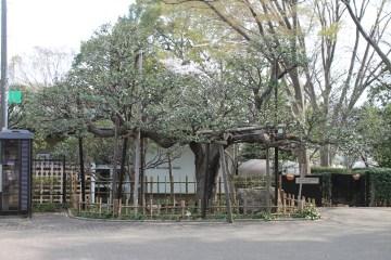 千葉公園 1
