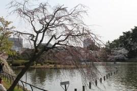 千葉公園 7
