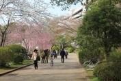 千葉公園 11
