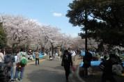 渋谷代々木公園 14