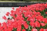 広島平和記念公園 13