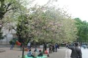 東京上野公園 26