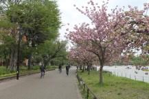 東京上野公園 36