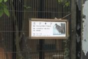東京上野動物園 7
