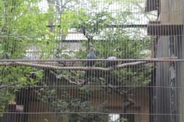 東京上野動物園 11