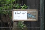 東京上野動物園 13