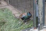 東京上野動物園 18