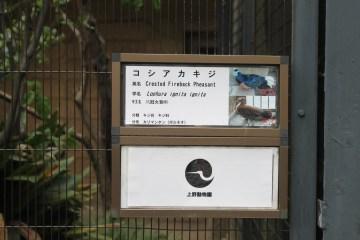 東京上野動物園 20