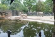 東京上野動物園 30