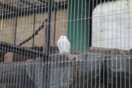 東京上野動物園 33