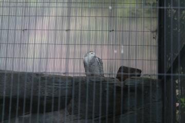 東京上野動物園 34