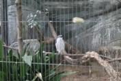 東京上野動物園 36