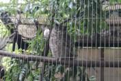 東京上野動物園 40