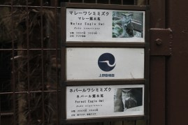 東京上野動物園 43